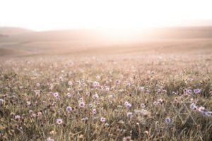 AMLY Botanical Skincare wildflower meadow, Sussex with rolling hills